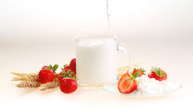 Milk in a transparent mug and cottage cheese ч a strawberry on. A white background, milk a stream flows in a mug royalty free stock images