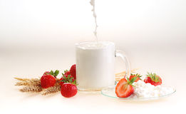 Milk in a transparent mug and cottage cheese. ч a strawberry on a white background, milk a stream flows in a mug royalty free stock photography