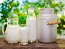 Milk in various dishes. Stock Images