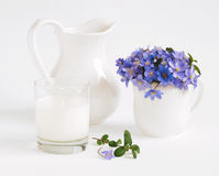Milk and violets. Milk it glass and violets Stock Images