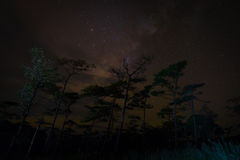 Milk Way night sky over pine trees Stock Photography