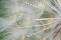 MILK WEED ABSTRACT FLOWER Stock Photo