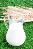 Milk and wheat Royalty Free Stock Images