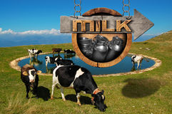 Milk - Wooden Sign with Grazing Cows Stock Image