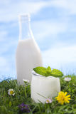 Milk and yogurt on the grass Royalty Free Stock Photos