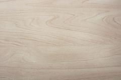 Milked birch wood grain texture. Pattern background Stock Photography