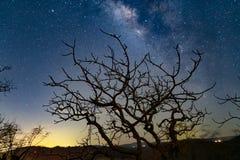 Milkeyway Galaxy Tree royalty free stock photos