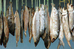 Milkfish Royalty Free Stock Images