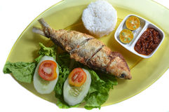 Milkfish fry Stock Photography