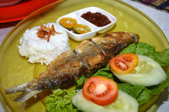 Milkfish fry Stock Images