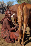 Milking in africa Stock Photo
