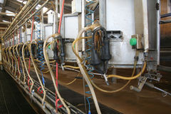Milking barn equipment Royalty Free Stock Image