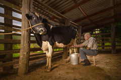 Milking Cow Stock Photos