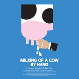 Milking of a Cow Royalty Free Stock Photos