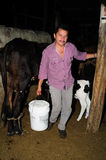 Milking cows - Colombia. Milking cows in RIVERA . Department of Huila. COLOMBIA Stock Photos