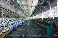 Milking equipment Royalty Free Stock Photo