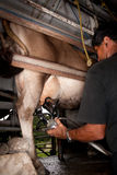 Milking Machine. Drawing from udder on dairy cow in Costa Rica stock image
