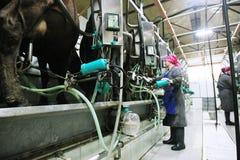 Milkmaid Immagine Stock