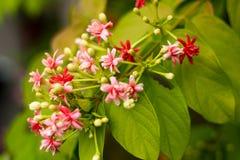 Milkweed flower. On blur background stock images