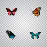 Milkweed realístico, Callicore Cynosura, Hairstreak e outros elementos do vetor Grupo de símbolos realísticos da borboleta igualm ilustração royalty free