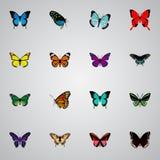 Milkweed realista, Morpho Hecuba, Polyommatus Icarus And Other Vector Elements Sistema de símbolos realistas de la polilla tambié ilustración del vector