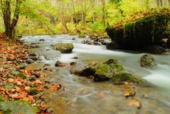 Milky Fall River. A milky stream captured in early fall showing water in motion Royalty Free Stock Photography