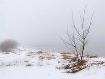 Milky morning. Winter foggy morning Royalty Free Stock Photos