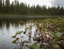 Milky river Stock Photo