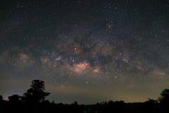 Milky sposób i sylwetka drzewo, Długa ujawnienie fotografia z Zdjęcie Stock