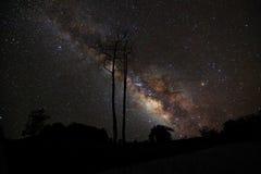 Milky sposób i sylwetka drzewo, Długa ujawnienie fotografia, z Obraz Stock
