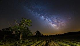 Milky sposób nad drzewem Zdjęcie Stock