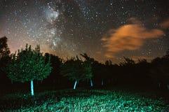 Milky sposób nad noc ogródem fotografia stock
