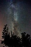 Milky sposób nad treetops zdjęcia royalty free