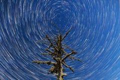 Milky sposób spadające gwiazdy Nieżywy drzewny timelapse Fotografia Stock
