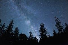 Milky sposób z drzewami Obraz Stock