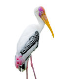 Milky stork Royalty Free Stock Photos