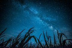 Milky way above green grass Royalty Free Stock Photos