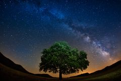 Milky way above a lonely tree in a starry night. In Dobrogea stock images