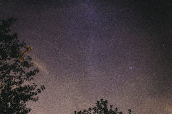 Milky Way above trees. Photo taken in Radzionków, Poland in September 2013 Stock Image