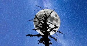 Milky Way. Dead tree silhouette Full Moon 4k timelapse. Pan. A view of the stars of the Milky Way. A silhouette of a dead mossy tree in the foreground. Moving stock video