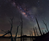 The milky way and the dead tree Royalty Free Stock Images