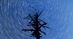 Milky Way. Falling stars.Dead tree silhouette 4k timelapse. Pan. A view of the stars of the Milky Way. A silhouette of a dead mossy tree in the foreground. Comet stock video