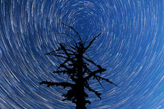 Milky Way. Falling stars. Dead tree silhouette. Timelapse Royalty Free Stock Photography