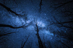 Milky way in the forest at starry night stock photography