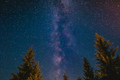 Milky Way Galaxy Behind The Pine Trees Warmed Up By Bonfire Royalty Free Stock Image