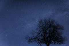 Milky Way galaxy image of night sky with clear stars. Milky Way galaxy image of night sky with natural silhouettes Royalty Free Stock Photo