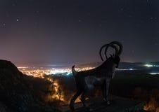 Milky way landscape with sheep. Beautiful night sky over Bulgaria. Europe. Stock Photos