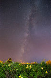 Milky way over Allamanda flower garden (contain noise and moving Stock Photos