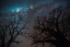 Milky way over baobab trees. Long exposure and high ISO shot of milky way over silhouette of baobab trees, Tanzania Royalty Free Stock Photo