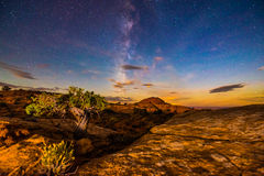 Milky Way over the Canyon Single Tree lid by rising moon light Stock Image